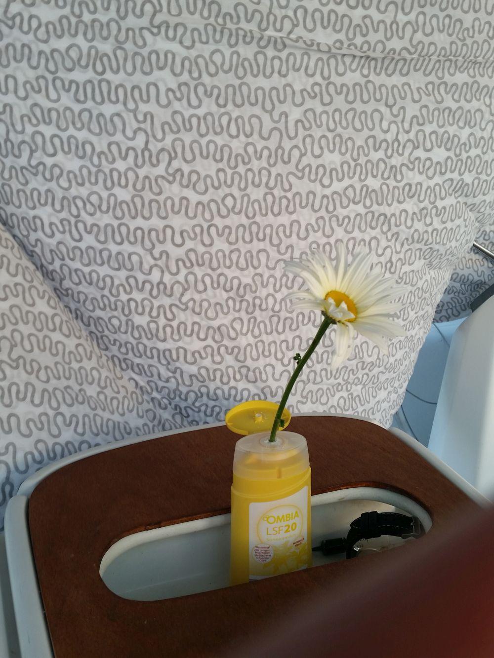 Romantik - eine Margerite in praktischer Sonnenmilch-Blumenvase