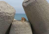 Die Molen-Katze