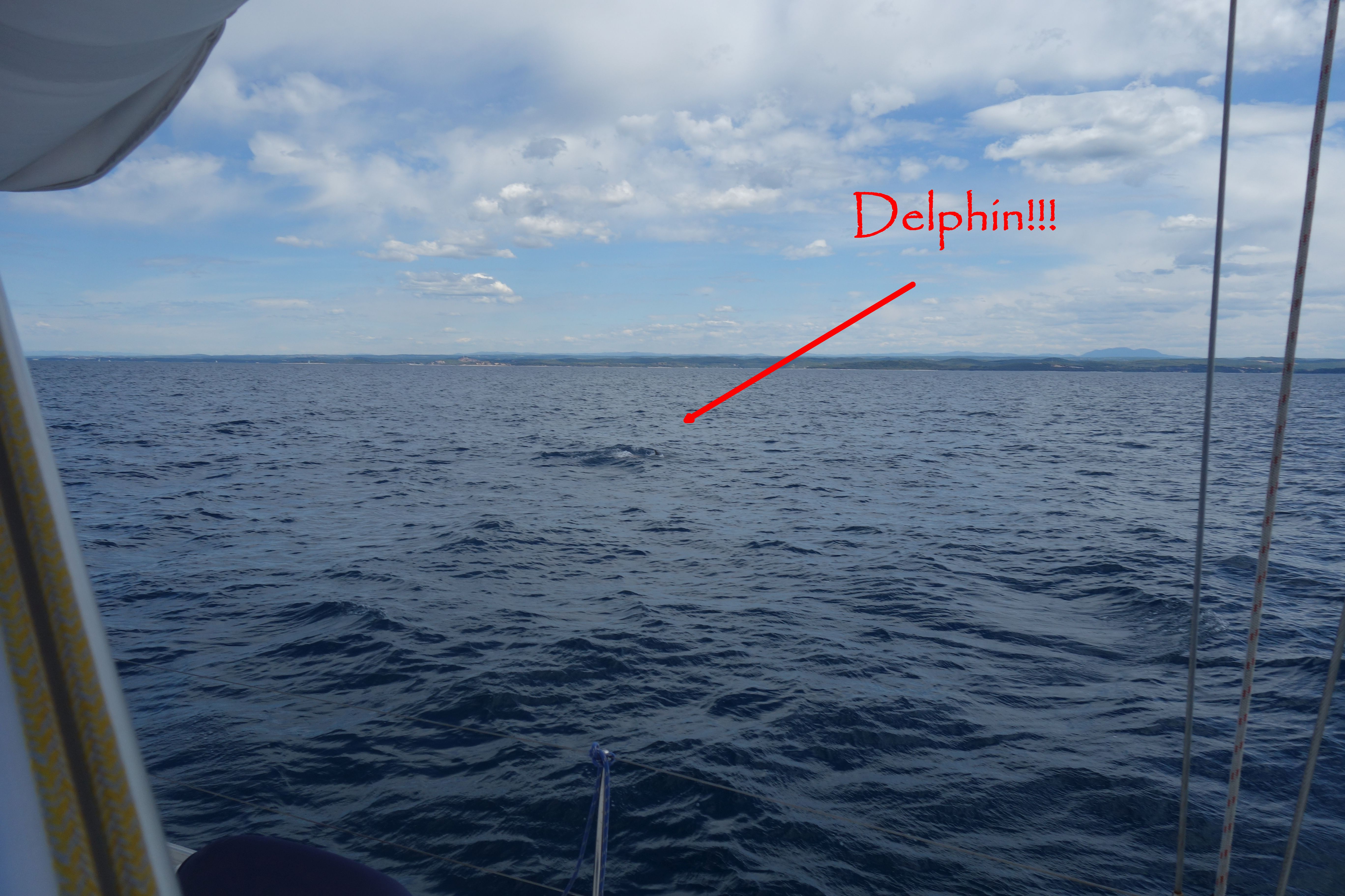 Ein Delphin!